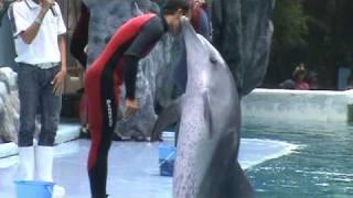 Dolphin Show @ SAFARI WORLD (Thailand Mother