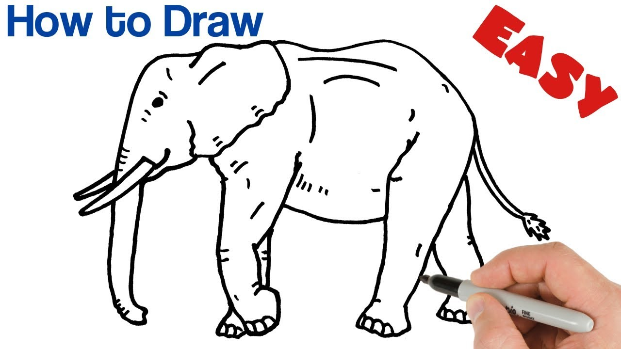 Featured image of post Simple Cute Easy Drawings Animals You can start with cartoon drawings as it will be easy and then you