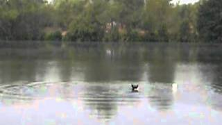 Собако рыболов спортсмен