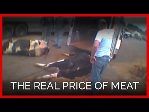 The REAL Price of Meat | One Cows Heartbreaking Trip to Slaughter