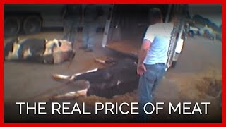 The REAL Price of Meat | One Cow