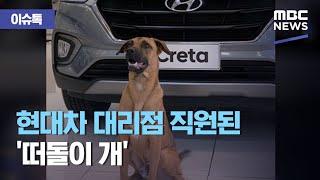 [이슈톡] 현대차 대리점 직원된 '떠돌이 개&#…