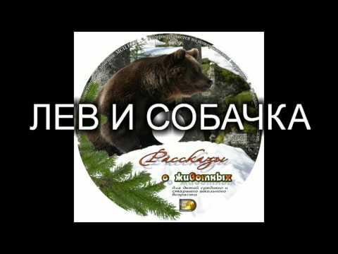 Детский рассказ о животных ЛЕВ И СОБАЧКА МСЦ ЕХБ (Благотворительный фонд Дом Тепла)