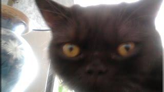 # 222 Уретростомия  у кота.Делюсь опытом.