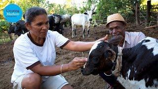 Relancer la filière du bétail à Madagascar