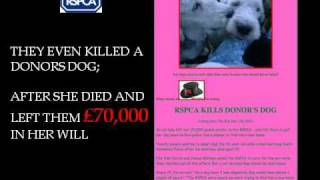 Rspca slaughter 10 dogs with bolt gun