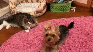 Огромные покупки из зоомагазина//Покупки из Дог бутика//одежда для собак For my dogs и puppy Angel