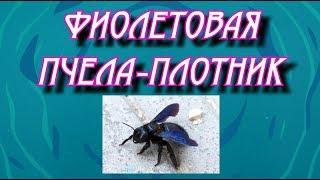 Выпуск 11. Пчела-плотник.