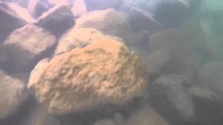 レイド レベルクランク MID 水中アクション動画