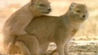 Животный секс