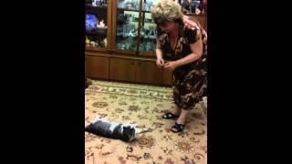 ученый кот Мурзик выполняет команды(Очень веселое видео!смотрите до конца!такого вы еще не видели!!!, 2015-03-31T17:33:18.000Z)