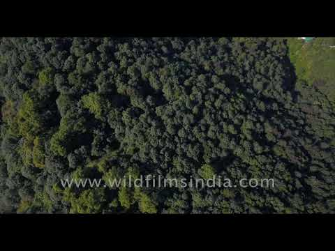 wildfilmsindia protected conservation zone: Himalayan forest at Moti Dhar, Mussoorie