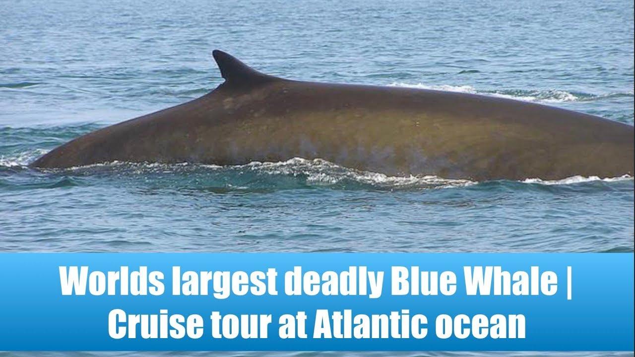 Whale Watching Virginia Beach You