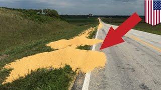 Trucker's revenge: Fired truck driver dumps 1,000 bushels of corn on highway - TomoNews