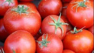 Выращивание томатов  Подвязка помидор| sprouts of tomatoes(В этом видео представлена информация нашего быта, как томаты, помидоры, подвязка томатов, теплица, поликарб..., 2016-06-26T20:14:02.000Z)
