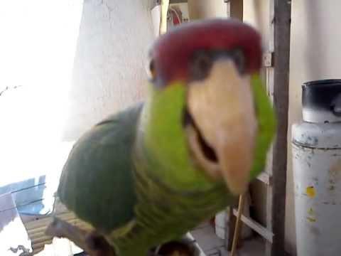 Jaulas para Pájaros - Fábrica de Jaulas en Mexico