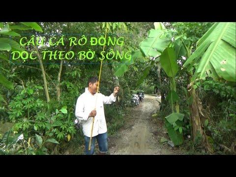 CÂU CÁ RÔ ĐỒNG  DỌC THEO BỜ SÔNG, TRÚNG Ổ CÁ RÔ GIẬT CÁ THẤY MÀ MÊ - FISHING (Pou Phung)