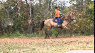 Strawberry roan Tennessee Walking Horse mare automatic transmission