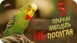 5 причин не заводить попугая