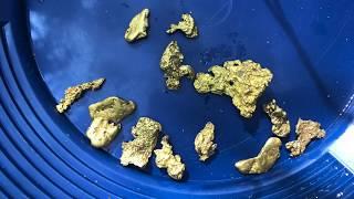 Virginia Gold Nuggets!
