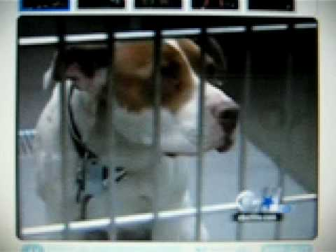 Pit bulls attack at supermarket in West Dallas