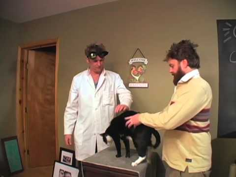Cat Chiropractor 1