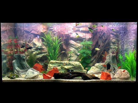 How to decorate Juwel fish tank with a 3D Aquarium Background from Aqua Maniac? Here's the video