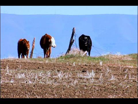 Cattle, Sheep, Grain, and Hay: The Imperial Stock Ranch Story