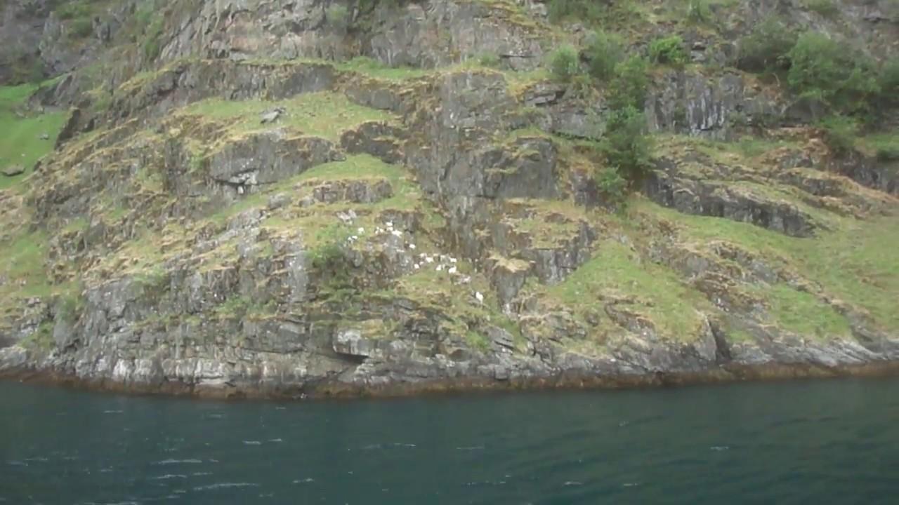 Туры в Норвегию водопад  козы