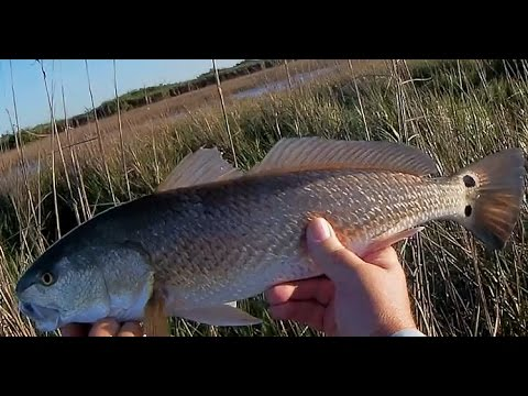 Good Folks & Good Fishing from YouTube · Duration:  4 minutes 50 seconds  · 298 views · uploaded on 01.06.2016 · uploaded by FV-Catfish.com