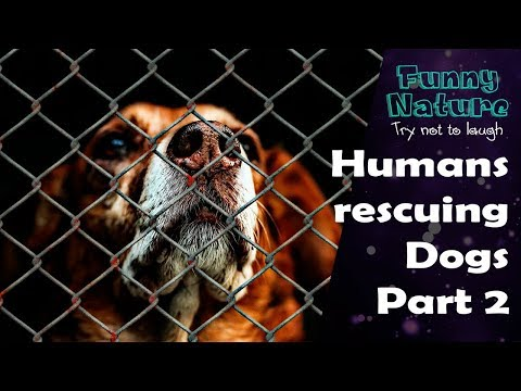Human Rescue Dog Part 2 - Best Dog Rescues - FunnyNature