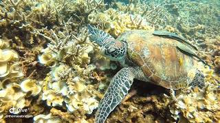 Turtles at Koh Tao with Koh Tao Scuba Club