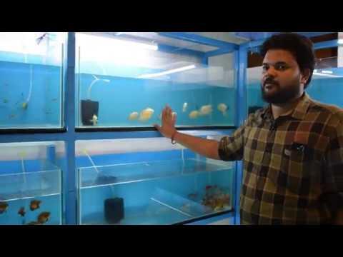 Coimbatore   Covai Fish Farm