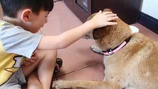 """My Son Says """"goodbye"""" To Our Dog At The Vet."""