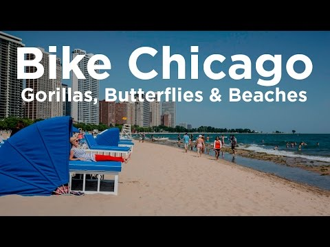 Bike Chicago 03 - Gorillas, Butterflies & Beaches