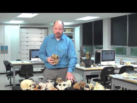Laboratory session with robust australopithecines