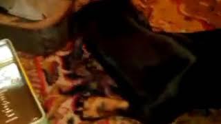 Кошки Против Собак -Месть Софи