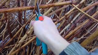 Gdzie pozyskać rurki dla murarek, jeśli nie rośnie u nas trzcina.