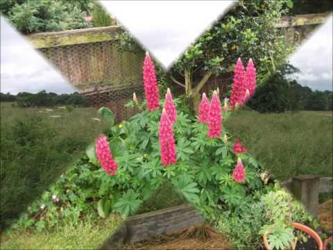 Eccleston village cheshire open gardens june 2016