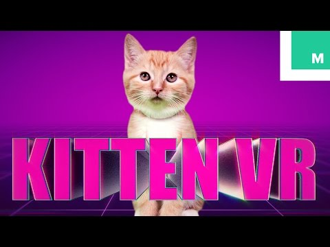 If Cats Could Experience Virtual Reality