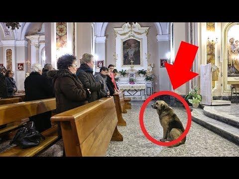 Ovaj pas je svaki dan išao u crkvu, a ono što mu se desilo je nevjerovatno