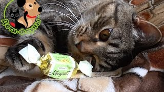 Можно ли сладкое собакам и кошкам?