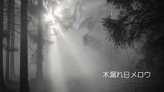 【亜沙】木漏れ日メロウ【Lyric Video】/ 【Asa】Komorebi Mellow【Lyric Video】