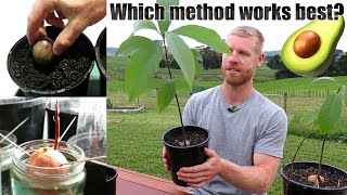 The BEST Way T๐ Grow Avocado From Seed | 0 - 5 Months of Growth