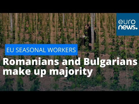 euronews (in English): EU seasonal workers: Romanians and Bulgarians make up majority of seasonal workers in Europe