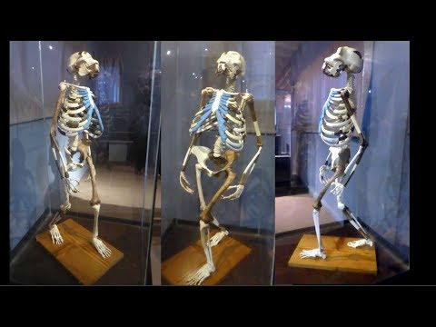 """Addis Ababa - """"Lucy"""" in National Museum of Ethiopia"""