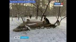 Вести-Хабаровск. Заложники бродячих собак
