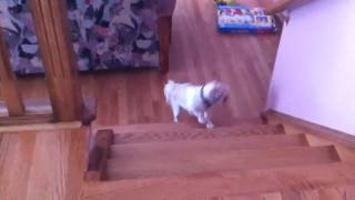 Dog Can't Go Upstairs
