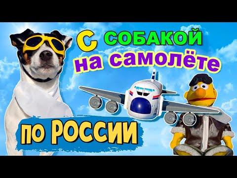 Как провести собаку в самолете по россии