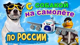Как перевезти собаку в самолете по России